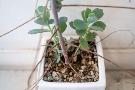 植物シリーズ。
