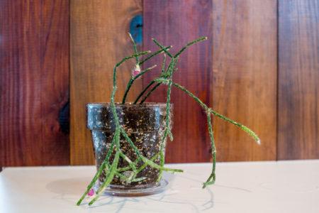 植物の植替え。